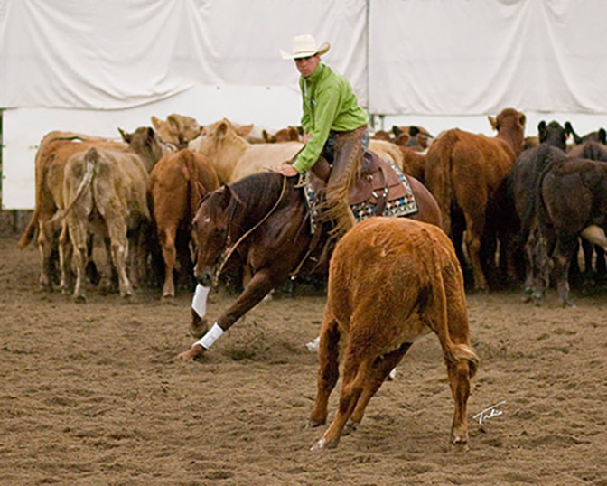 Cayley Wilson Cutting Horse Trainer Abbotsford, BC